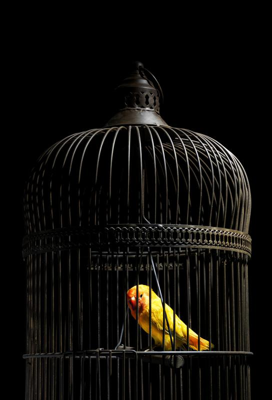 Birds Everywhere 8 Acrylic Print