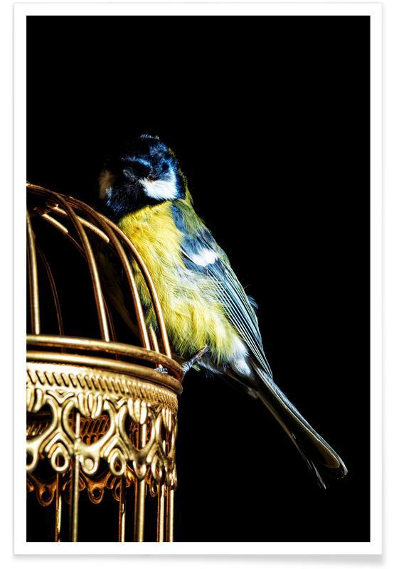 Kanaries, Birds Everywhere 9 poster