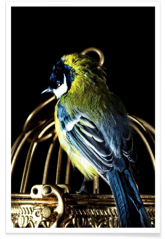 Canaris, Birds Everywhere 10 affiche