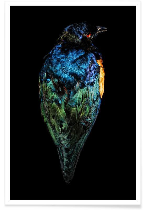 Kanaries, Birds Everywhere 11 poster