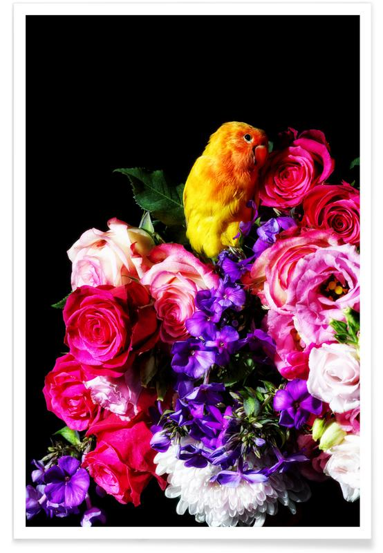 Parrots, Roses, Birds Everywhere 18 Poster
