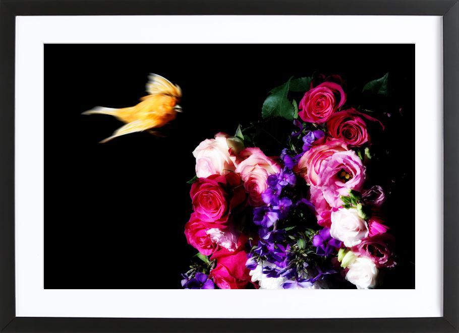 Birds Everywhere 19 affiche sous cadre en bois