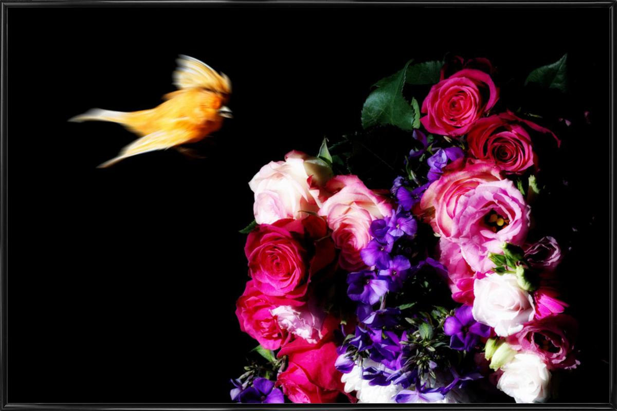 Birds Everywhere 19 -Bild mit Kunststoffrahmen