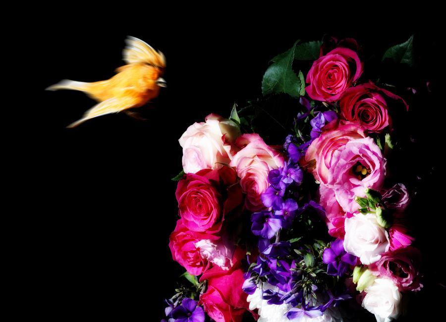 Birds Everywhere 19 -Leinwandbild