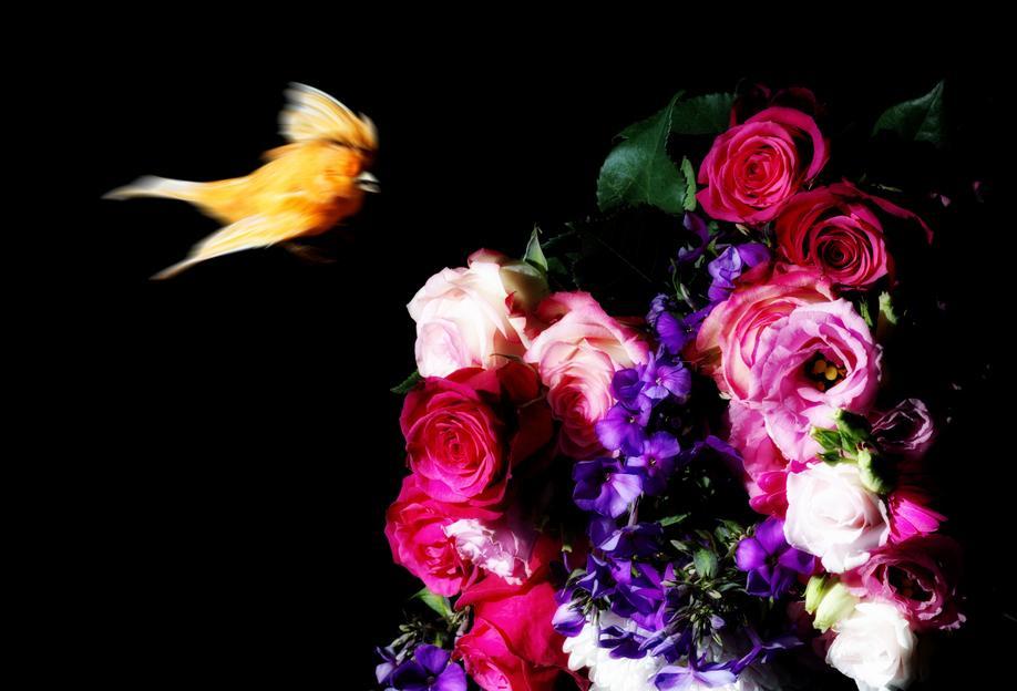 Birds Everywhere 19 alu dibond