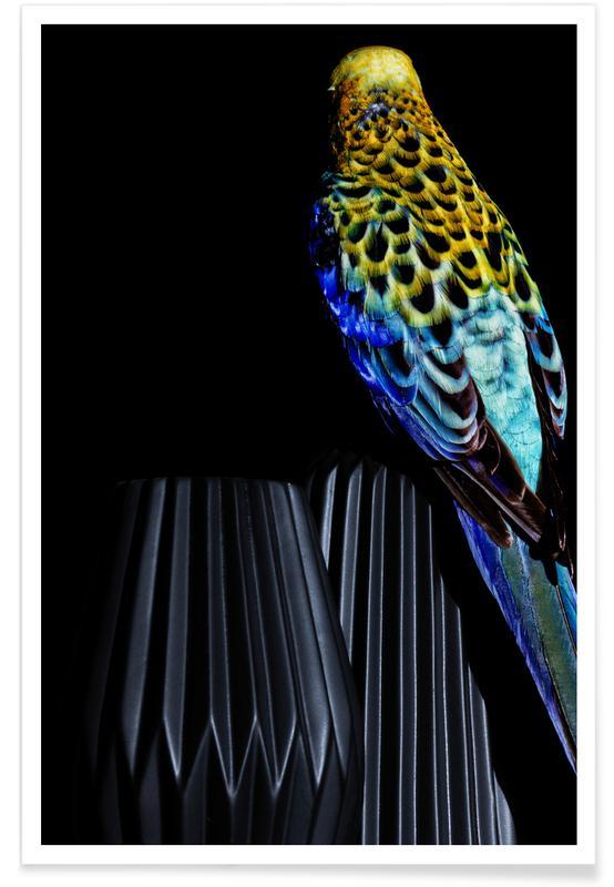 Birds Everywhere 20 affiche
