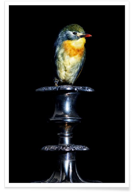 Birds Everywhere 21 -Poster