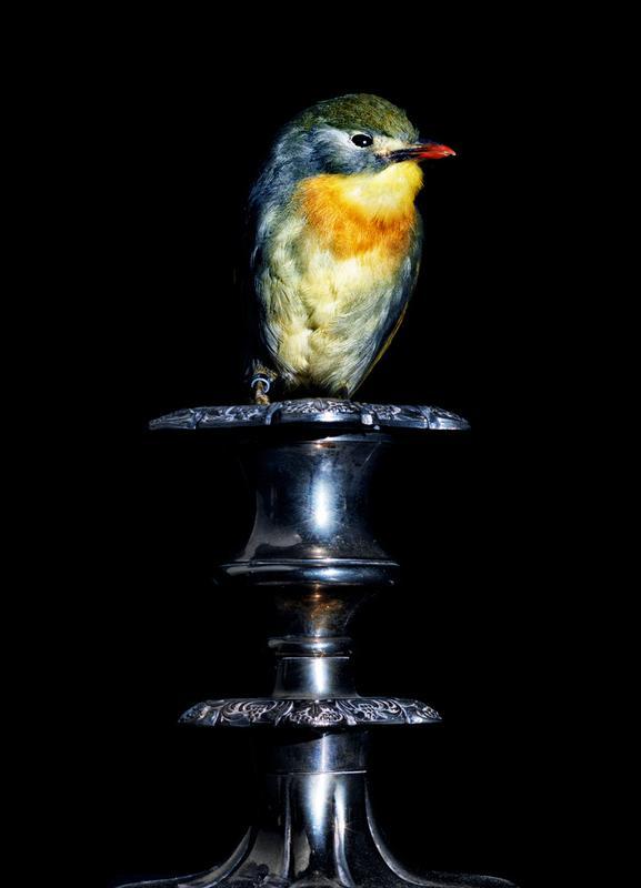 Birds Everywhere 21 toile