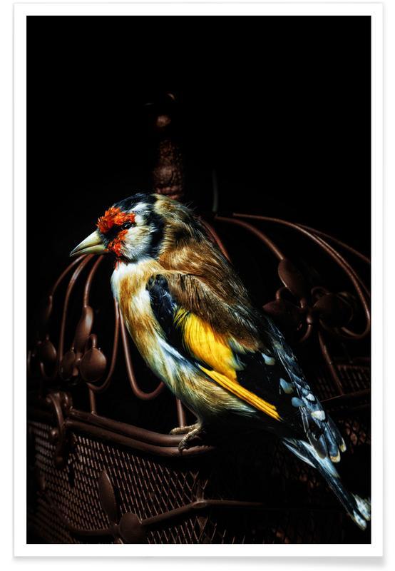 Kanaries, Birds Everywhere 22 poster