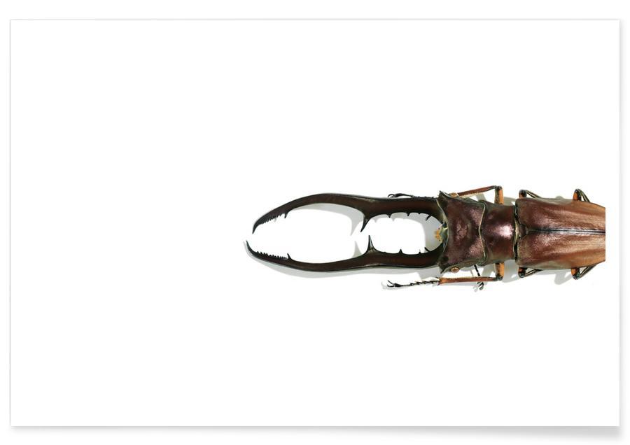 Käfer, Animalium 4 -Poster