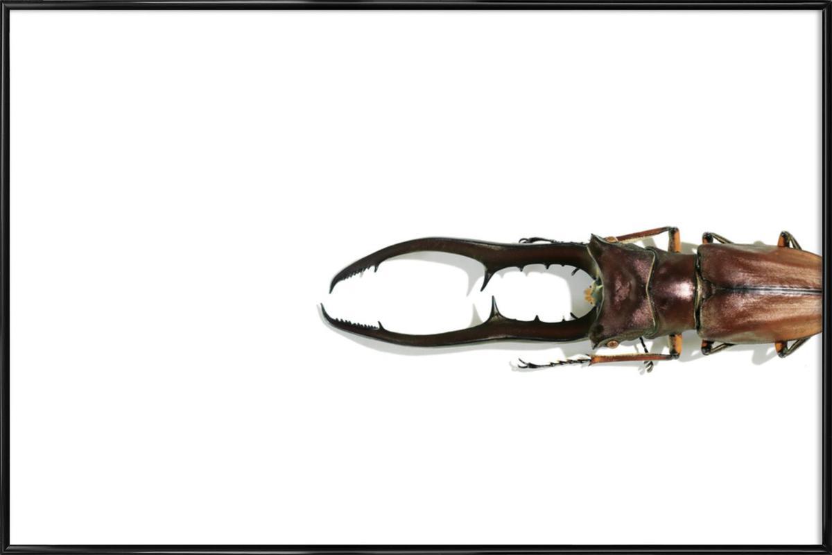 Animalium 4 -Bild mit Kunststoffrahmen