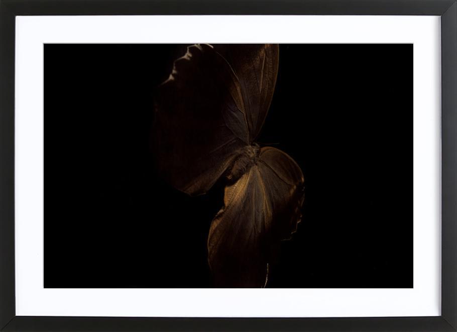 Butterflies 4 Framed Print