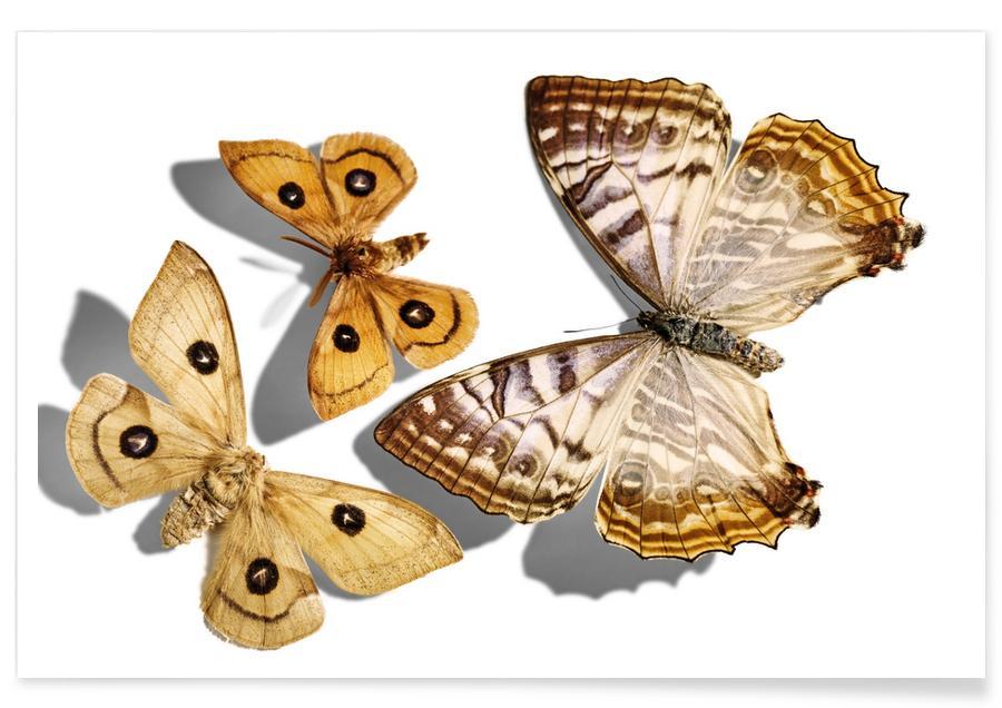 Vlinders, Butterflies 5 poster