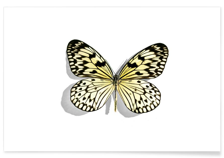 Vlinders, Butterflies 7 poster