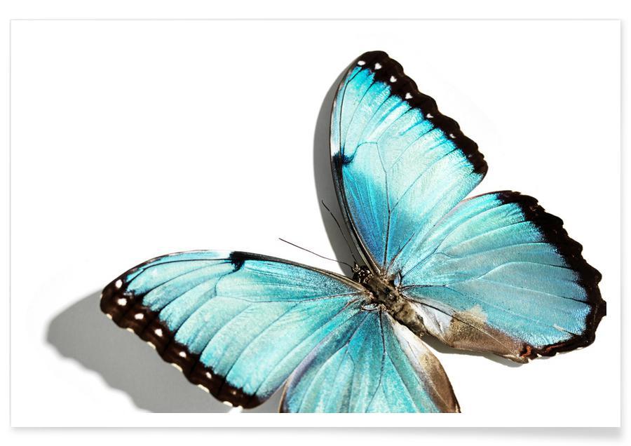 Butterflies 10 -Poster