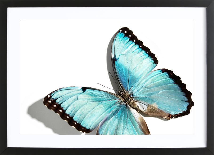 Butterflies 10 ingelijste print
