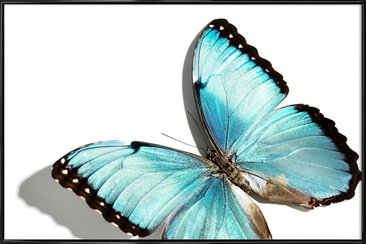 Butterflies 10 ingelijste poster