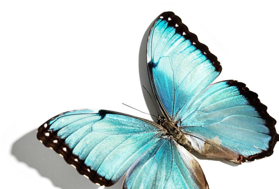 Butterflies 10 alu dibond
