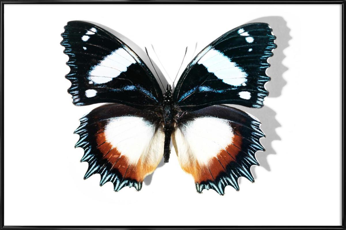 Butterflies 13 -Bild mit Kunststoffrahmen