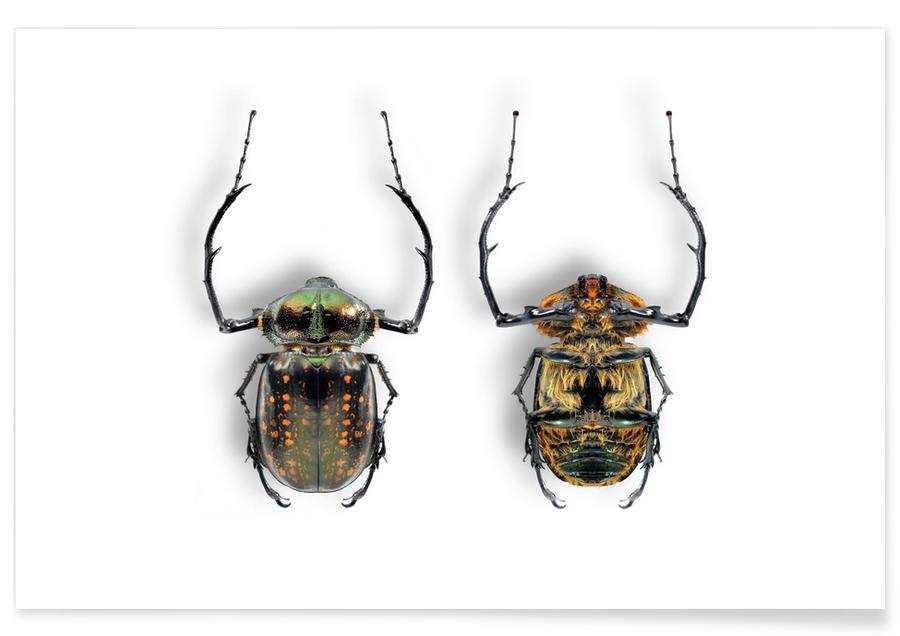 Beetles, Animalium 5 Poster