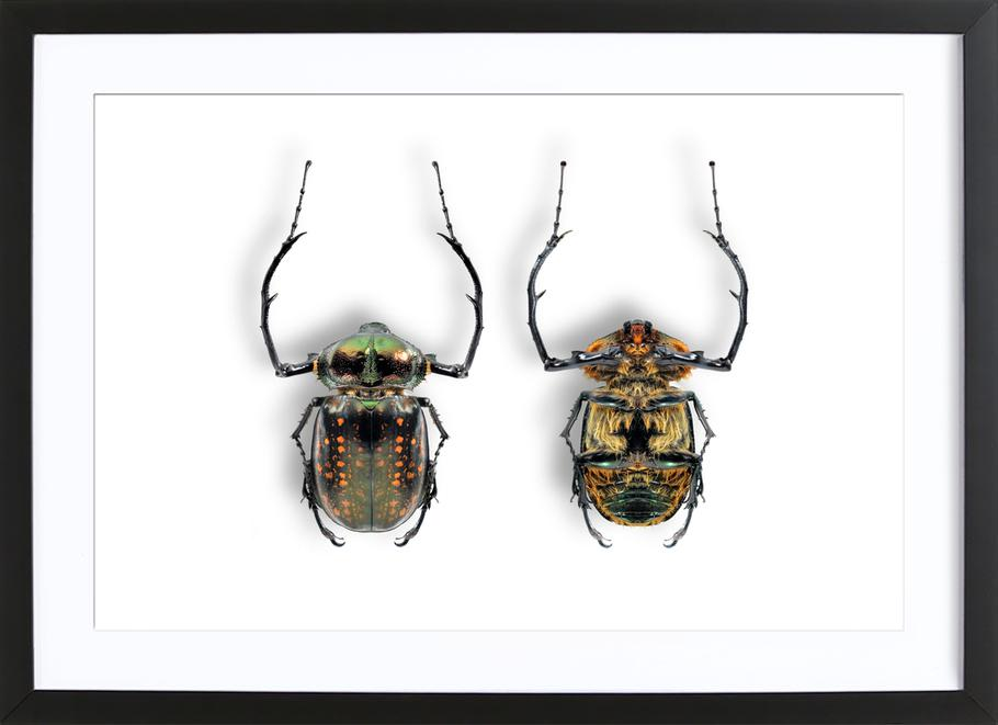 Animalium 5 Framed Print