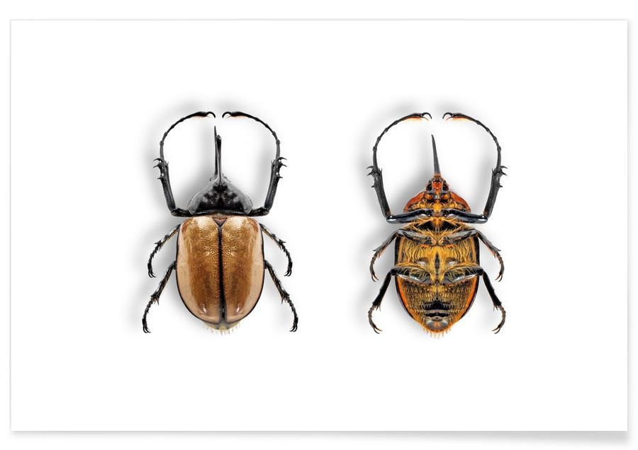 Käfer, Animalium 7 -Poster