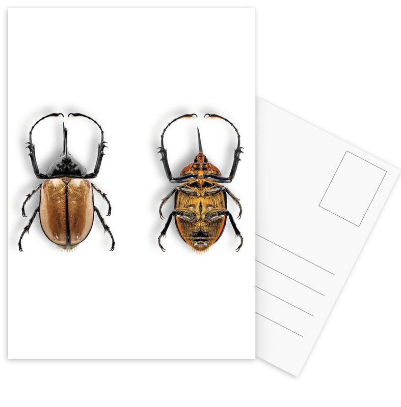 Animalium 7 -Postkartenset