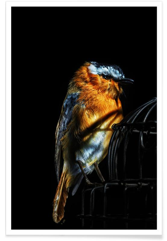 Kanarieöarna, Birds Everywhere 2 Poster
