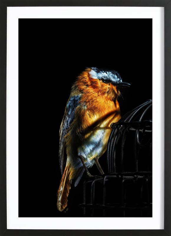 Birds Everywhere 2 Framed Print