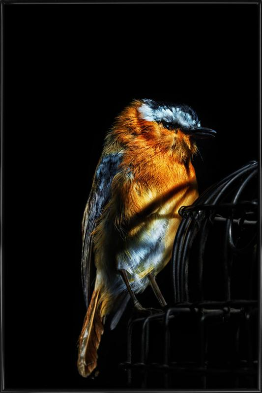 Birds Everywhere 2 Framed Poster