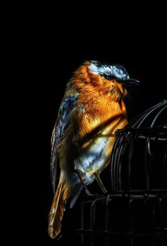 Birds Everywhere 2 Acrylic Print