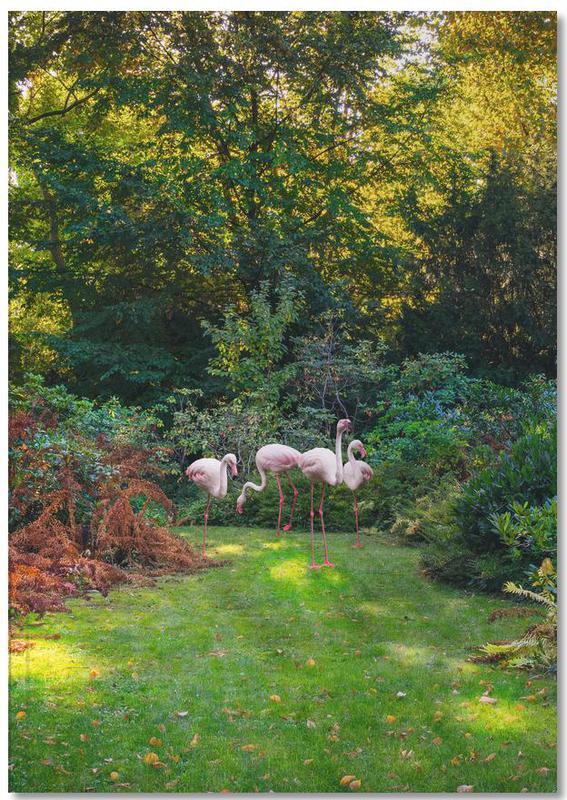 Flamingos, Flamingos Notebook