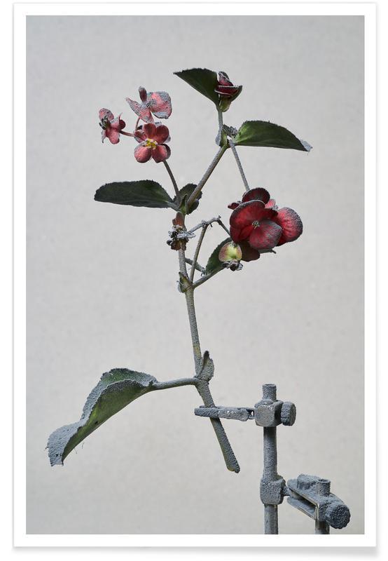 , Begonia poster