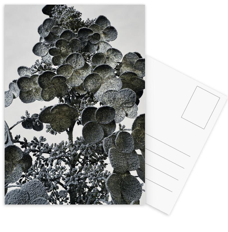 Bladeren en planten, Staub - Hortensie ansichtkaartenset
