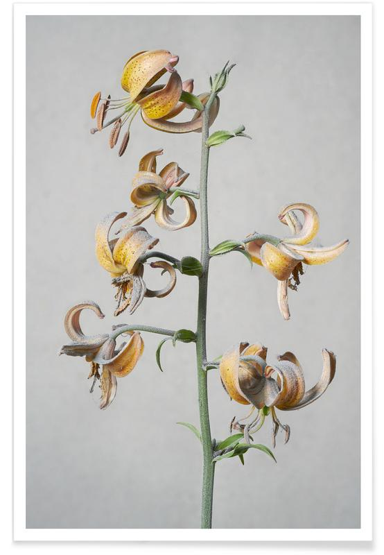 Lilies, Lily Poster