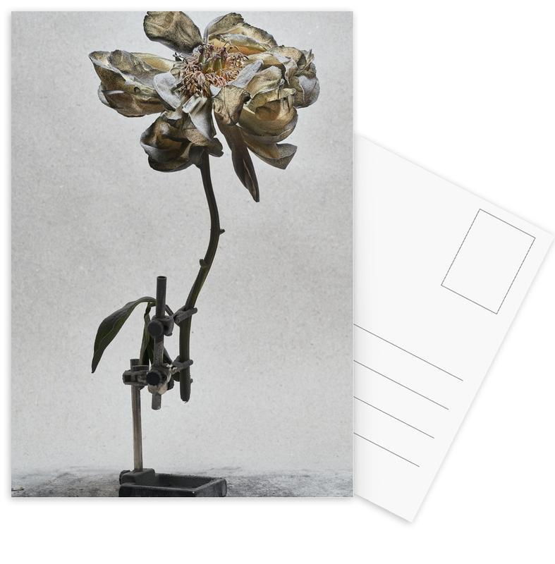 Staub - Pfingstrose Postcard Set