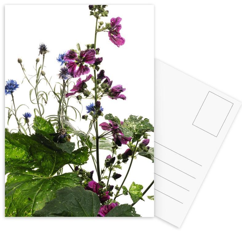 Flora - Wilde Malve Postcard Set