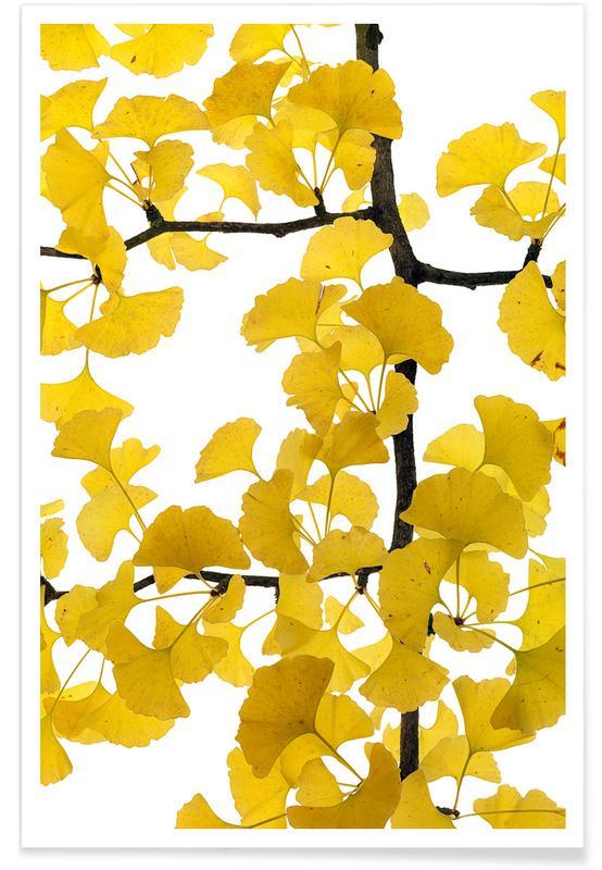 Blade & planter, Ginkgo Plakat