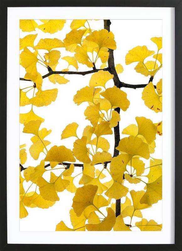 Flora - Ginko Plakat i træramme