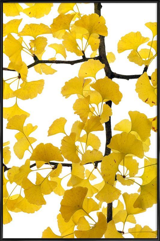 Flora - Ginko affiche encadrée