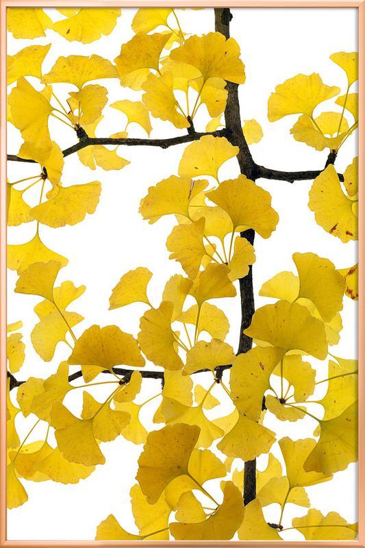 Flora - Ginko Poster in Aluminium Frame
