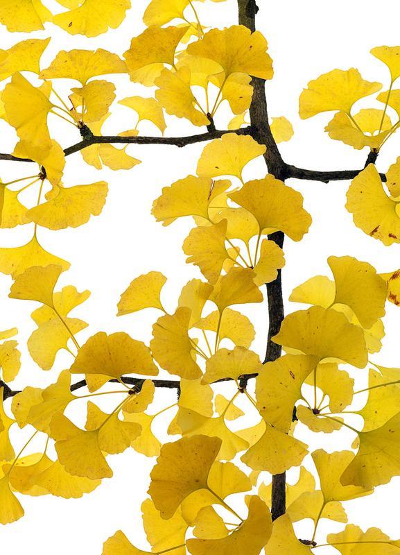Flora - Ginko canvas doek