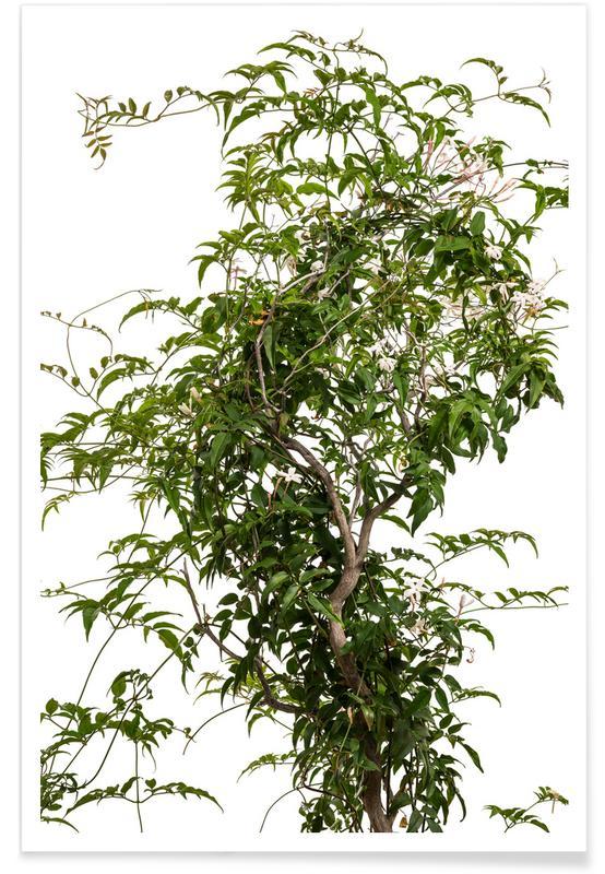 Bomen, Jasmijn poster