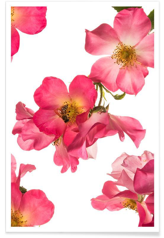, Flora - Rose 2 Poster