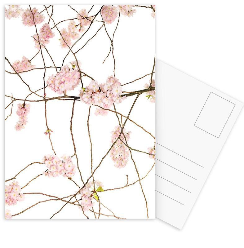 Flora - Japanische Kirsche cartes postales