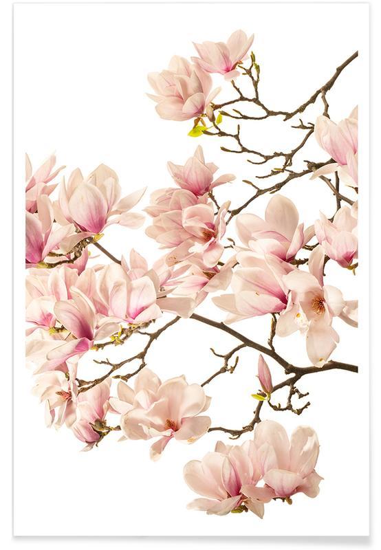 Flora - Magnolie 2 poster