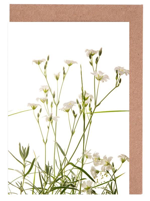 Flora - Teppich Schleierkraut -Grußkarten-Set