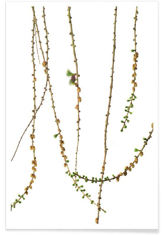 Blätter & Pflanzen, Lärche -Poster