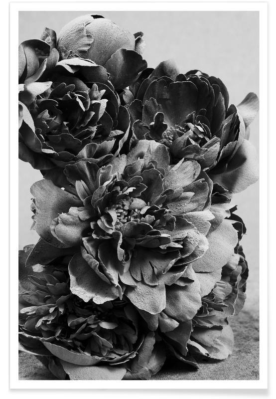 Roses, Black & White, Peony Poster