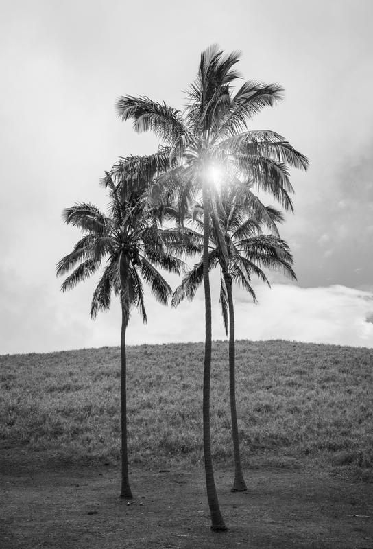 Palme Osterinsel -Alubild